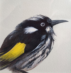 BIRDS OF THE BOTANIC GARDENS - PORTRAITS  IN  INK,          29 February - 1 March 2020 - Beginners to Intermediate