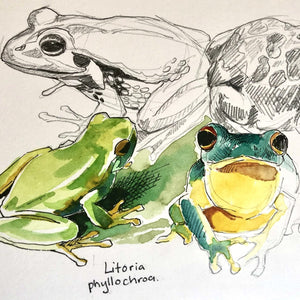 Studio Workshop for youth: NATURE JOURNALING AND DRAWING - AUSTRALIAN FROGS - 12 April 2021