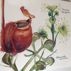 Studio Workshop for youth: NATURE JOURNALING AND DRAWING - CARNIVOROUS PLANTS - 29 June 2021