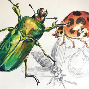 Studio Workshop for youth: NATURE JOURNALING AND DRAWING - AUSTRALIAN BEETLES - 28 June 2021