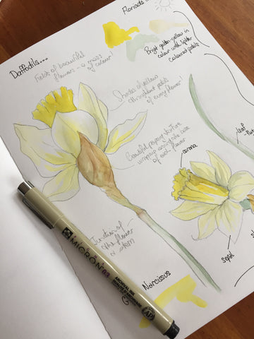 Coming soon: Create a Visual Art Diary of your Floriade Experience with Julia Landford!