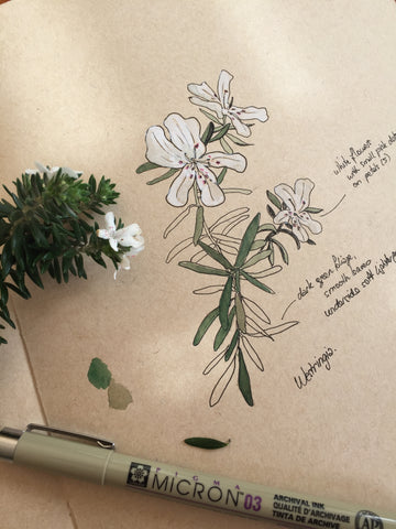 Nature Journaling: Using Art to Connect with Nature - with Julia Landford at ANBG, 10.00am - 12.30pm Sunday 24 November 2019