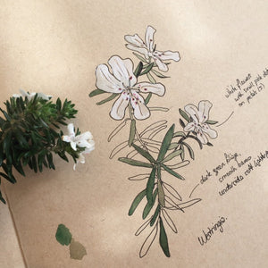 INTRODUCTION TO NATURE JOURNALING - ONLINE TUTORIAL - 10.00 - 11.30am, Sunday 14 June 2020