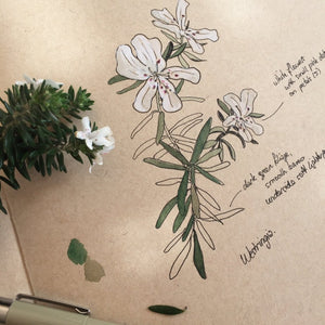 Online tutorial: INTRODUCTION TO NATURE JOURNALING - 7 February 2021- Beginners