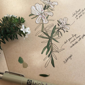 NATURE JOURNALING: USING ART TO CONNECT WITH NATURE AT ANBG, Sunday 2 February 2020
