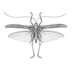 NEW!! INSECTS IN PEN & INK, 14 March 2020 - Beginners - Intermediate