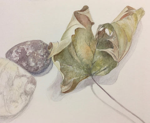 Evening Class: Drawing 1 Term One 2019 - with Gillian Carden