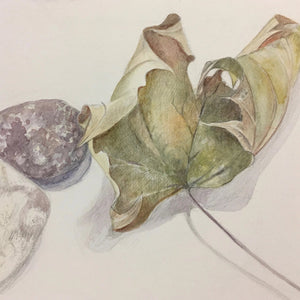 Evening Class: Drawing 1, Term One 2020 - with Gillian Carden