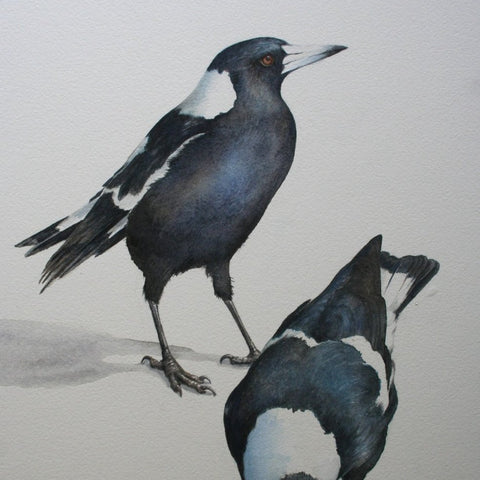 Australian Birds: Magpie  Watercolor Study - with Lesley Wallington