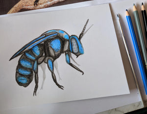 Native Bees with Nature Art Lab - Woden Arts Fair - Free Event supported by Woden Community Service