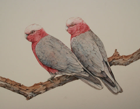 Galahs in Watercolour - with Lesley Wallington