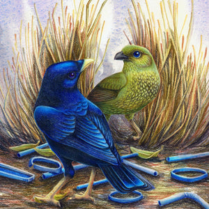 ILLUSTRATING BIRDS IN WATERCOLOUR & COLOUR PENCIL, 15 - 16 February, Beginners to Intermediate