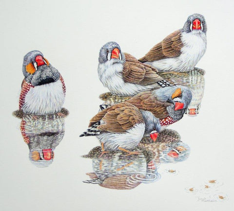 Textures of Nature in Coloured Pencil - with Janet Matthews