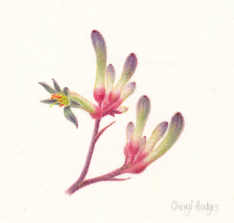 Introduction to Botanical Art - with Cheryl Hodges