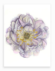 'A Peony in Grey' Botanical Watercolour Signed Giclee Fine Art Print