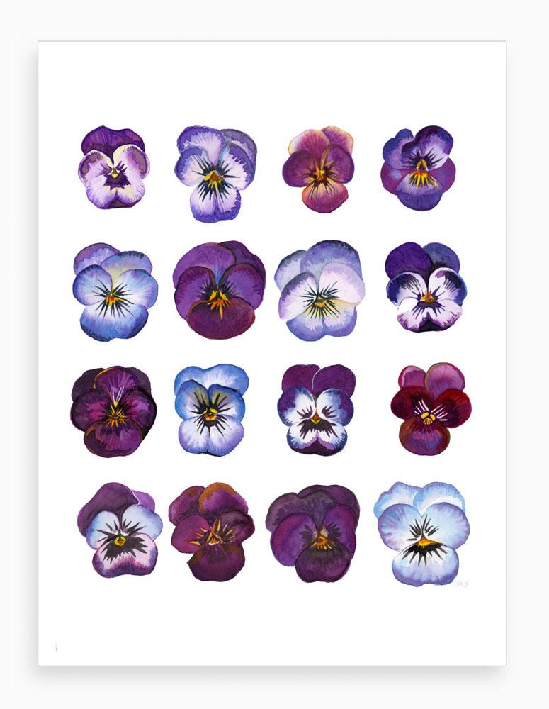 'A study of Violas' Botanical Watercolour Signed Giclee Art Print