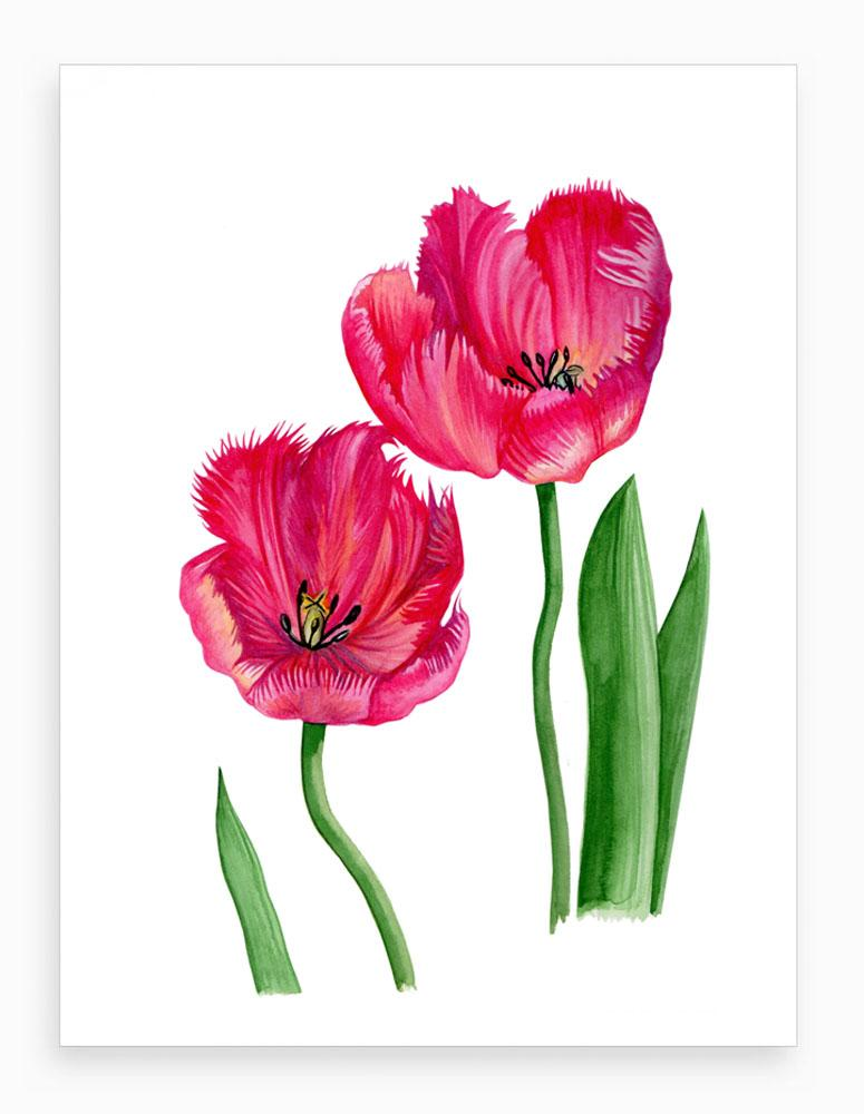 'Red Tulips' Botanical Watercolour Fine Art Print