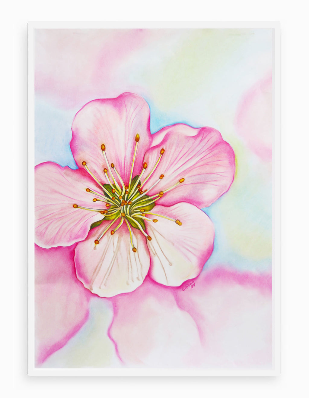Cherry Blossom Botanical Signed Giclee Art Print