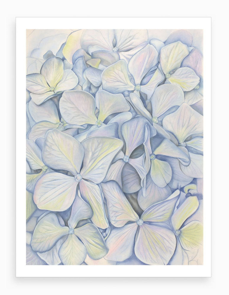 'Hydrangea Blooms in Blue' Giclee Art Print