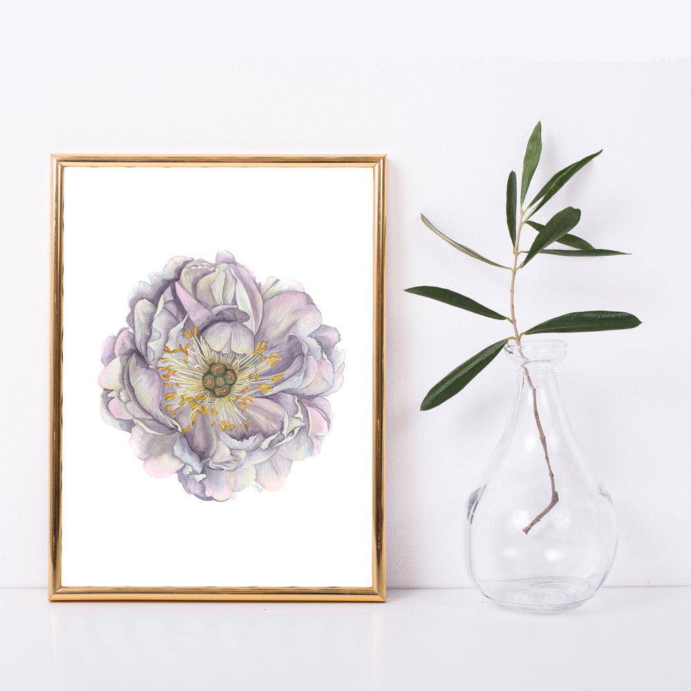 A Peony in Grey Botanical Watercolour- Fine Art Giclée Print