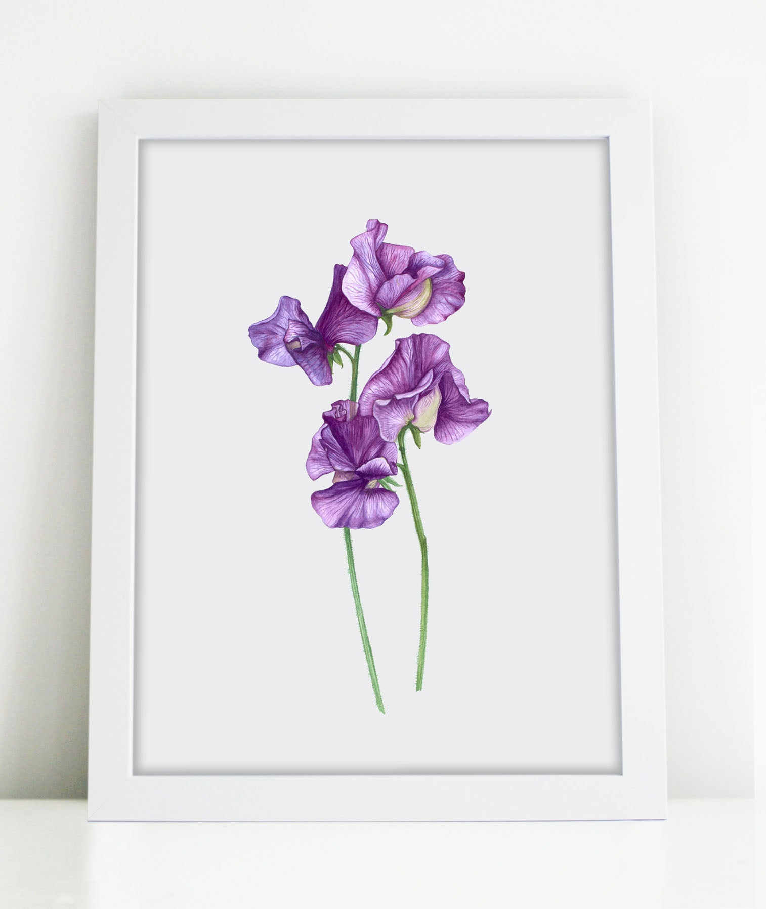'A Posy of Sweet Pea's' Botanical Watercolour Giclee Art Print