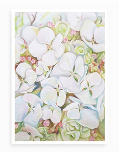 'Hydrangea Blooms in White' Giclee Fine Art Print