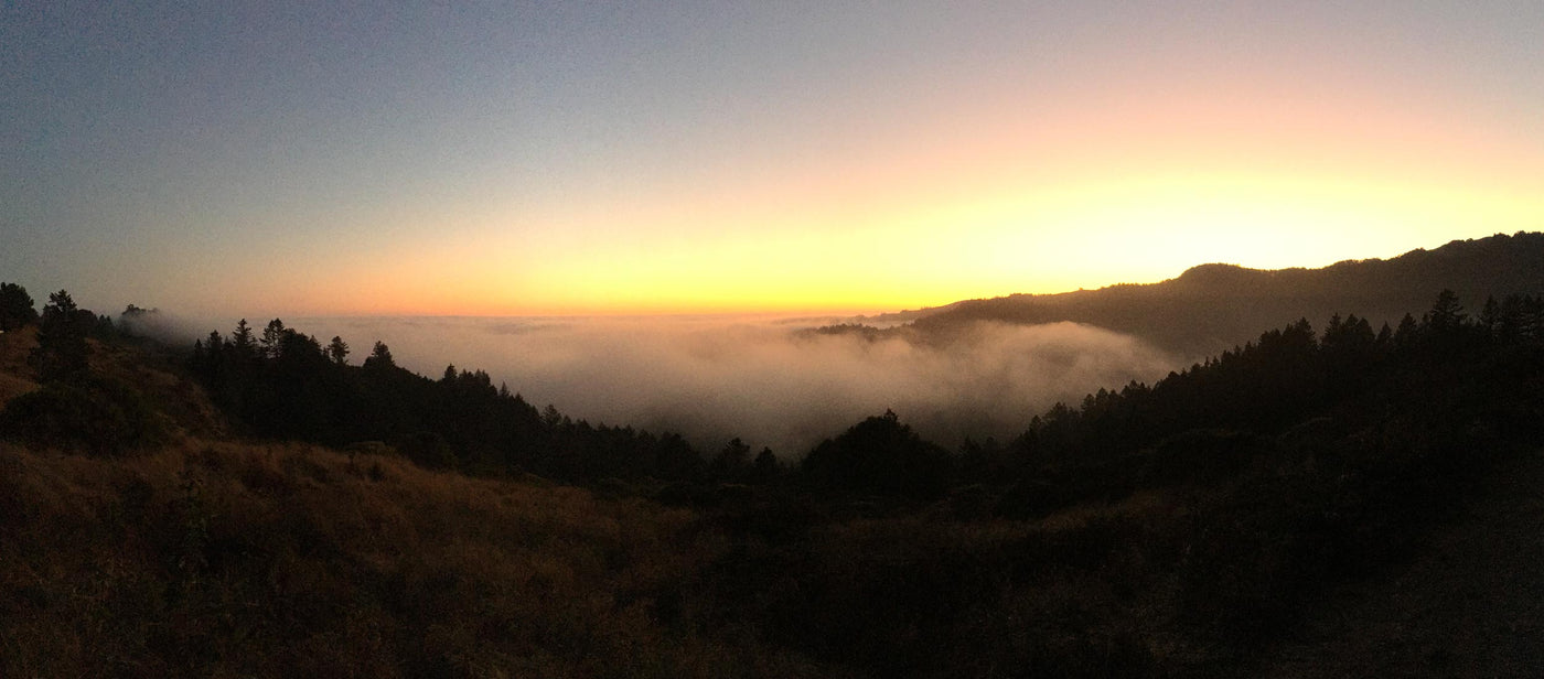 View of fog rolling in over Muir Woods while sun sets