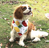 Dog Bandana 12 Fruit Styles! - BestPet