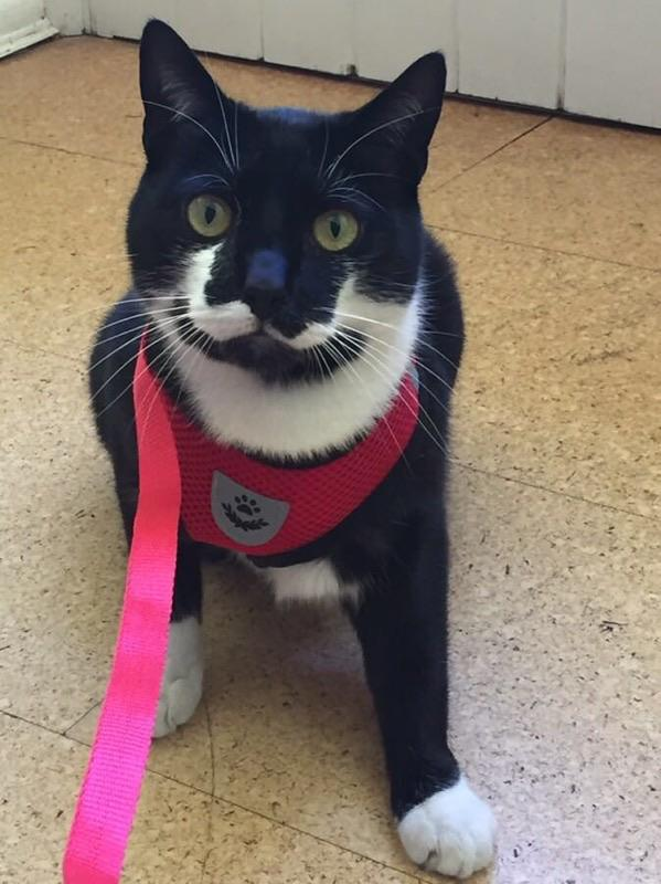 Cat Harness and Leash 7 Colours! - BestPet