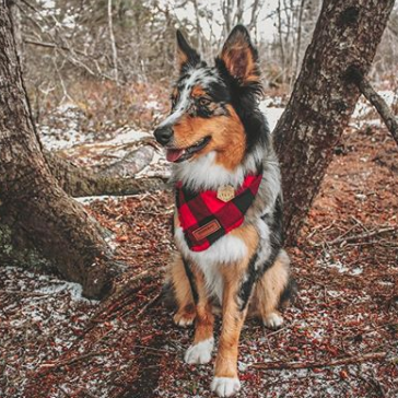Red Spruce Dog Bandana