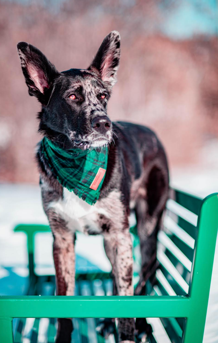 Evergreen Dog Bandana