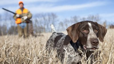 4G GPS Tracking for Hunting Dogs
