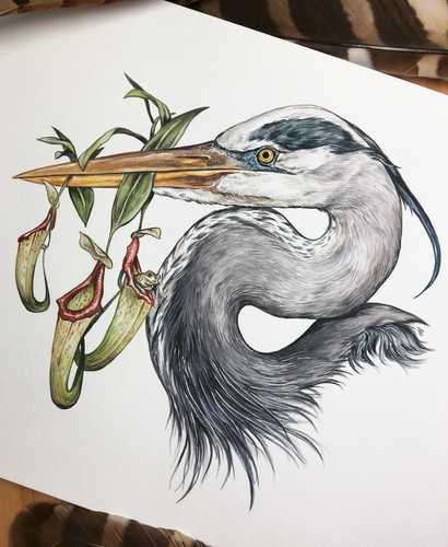 Blue Heron + Pitcher Plants