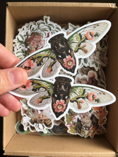 Two cicada stickers and mystery sticker