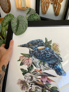 'Torch' Kingfisher original