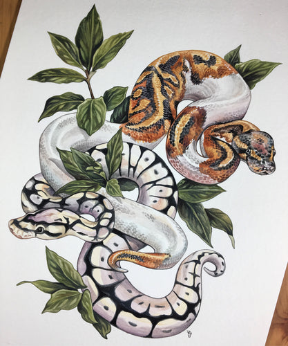 Ball Pythons + Bay Leaves