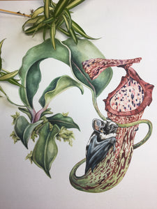 Pitcher plant + panda bat