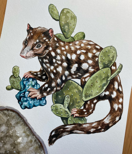 Quoll and Cacti