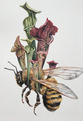 Bee + Pitcher plant