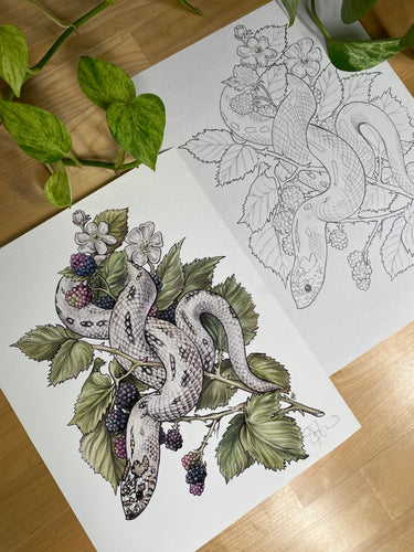 Hognose original sketch and print