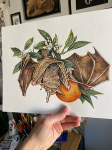 Fruit Bat + oranges