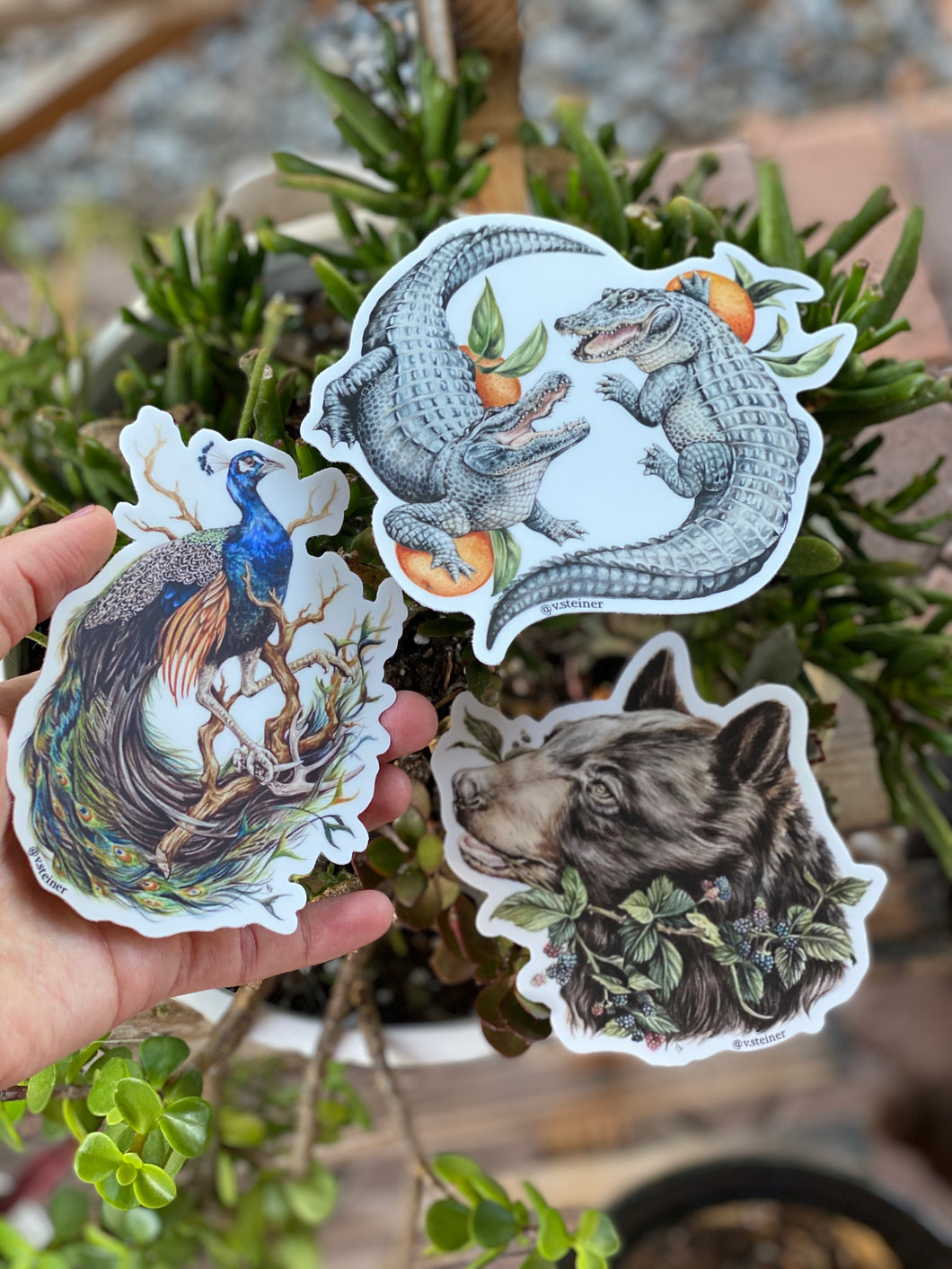 Florida pack - bear, gators and peacock stickers