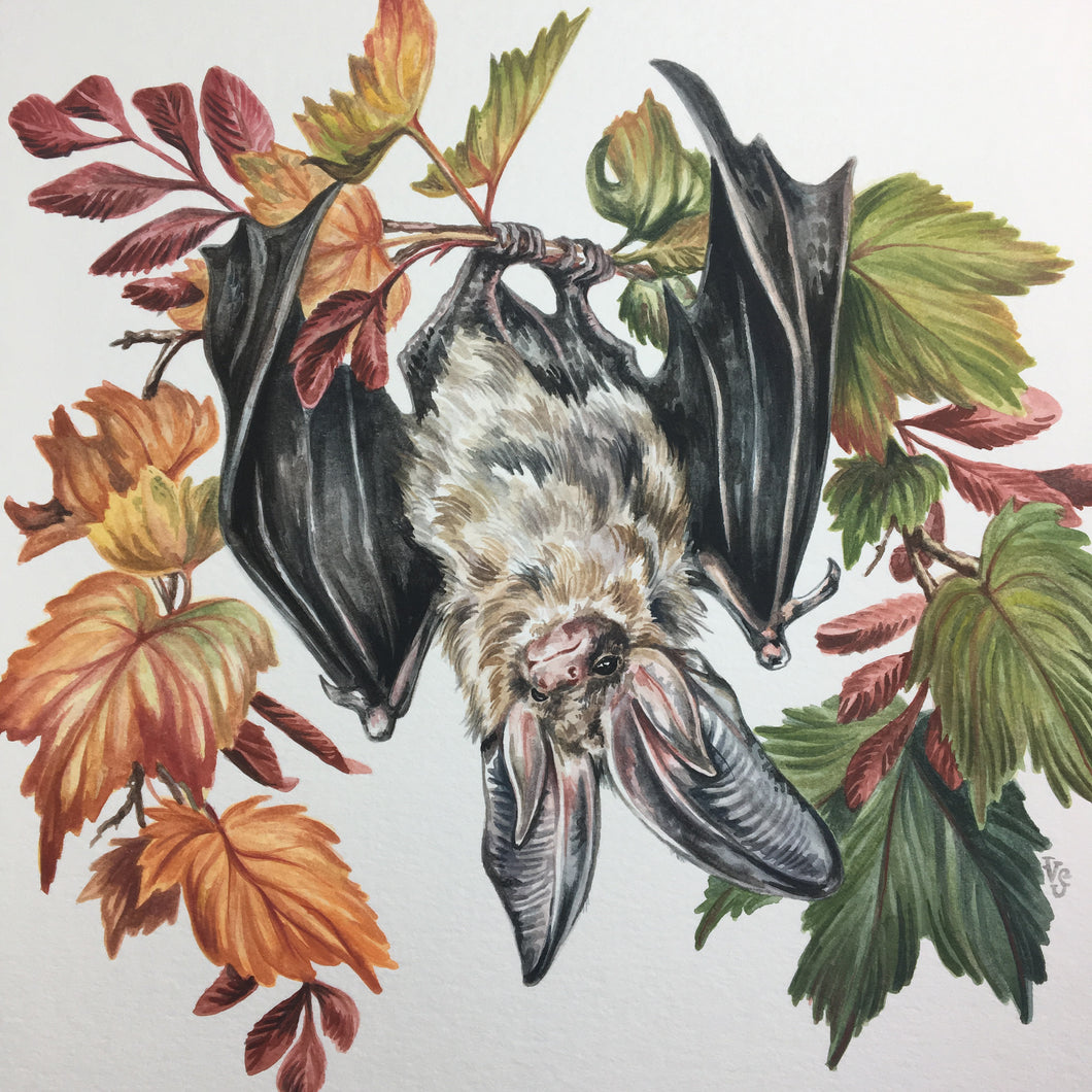 Changing seasons bat