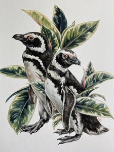 Penguins + Variegated Rubber Plant