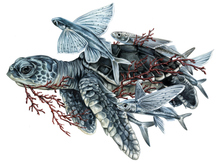 Load image into Gallery viewer, Sea Turtle + Flying Fish