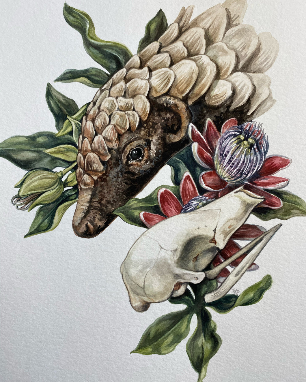 Pangolin original