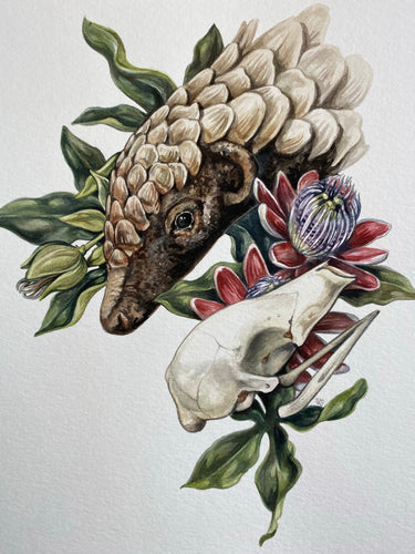 Pangolin + Passion flowers
