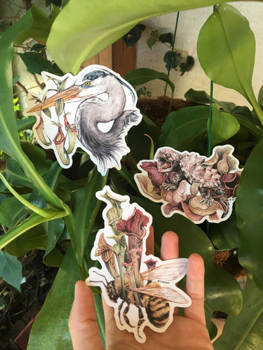 Pitcher plant sticker set