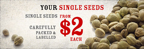 Your Single Seeds