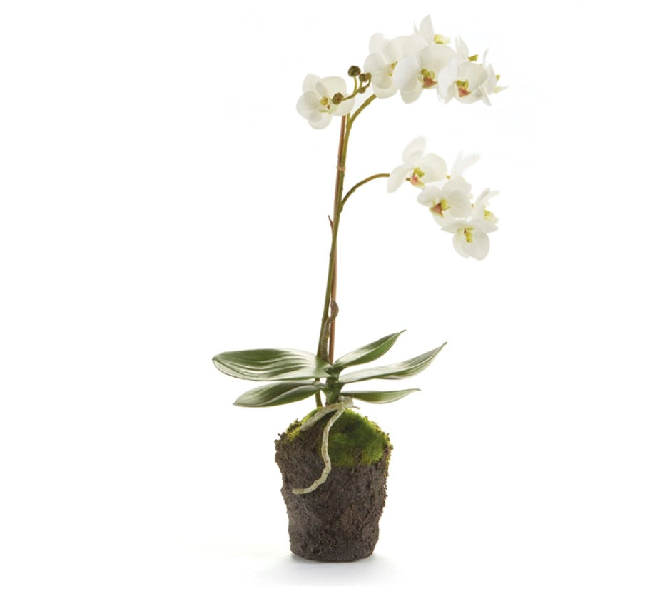 "17"" Phalaenopsis Orchid Drop In"